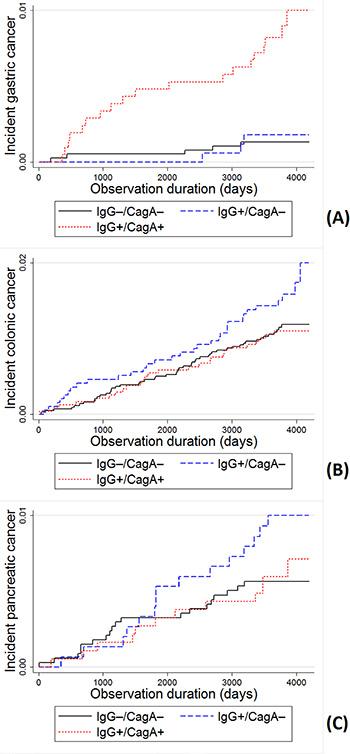 Incidence of cancer by H. pylori IgG and CagA serostatus.
