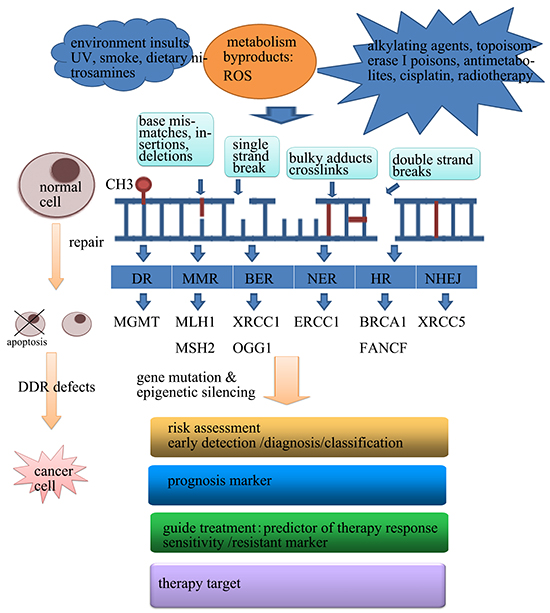 Oncotarget | The clinical value of aberrant epigenetic