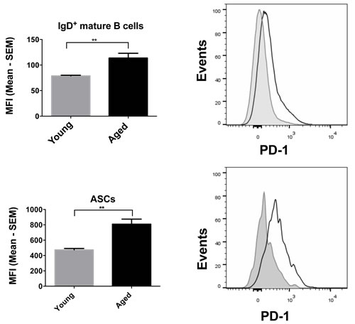PD-1 expression on mature B cells and ASCs.