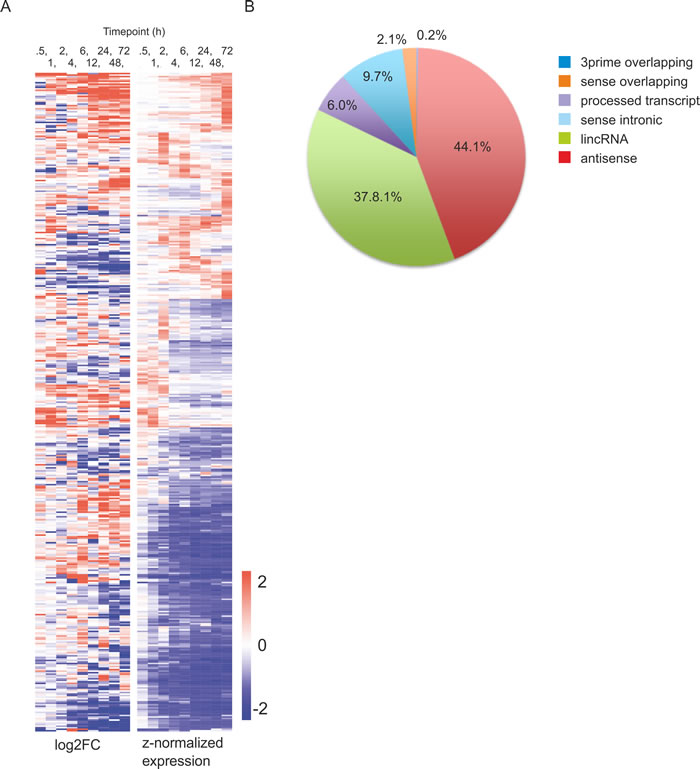 Differentially expressed lncRNAs during human Th17 cell priming.