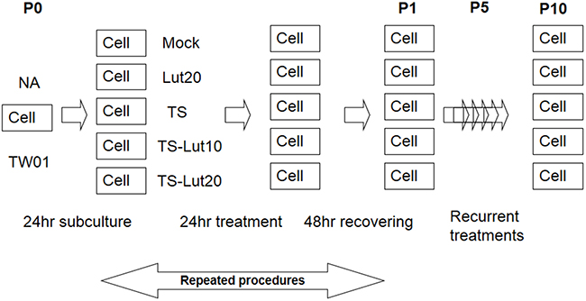 Representative illustration of recurrent chemical treatment of NPC cells.