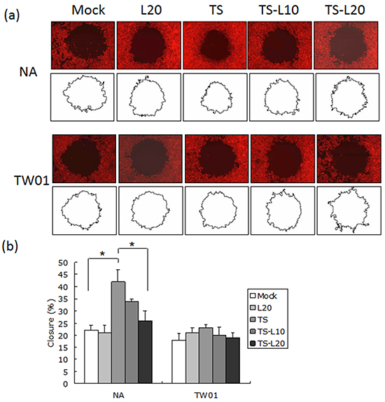 Luteolin represses reactivation-induced cell migration.
