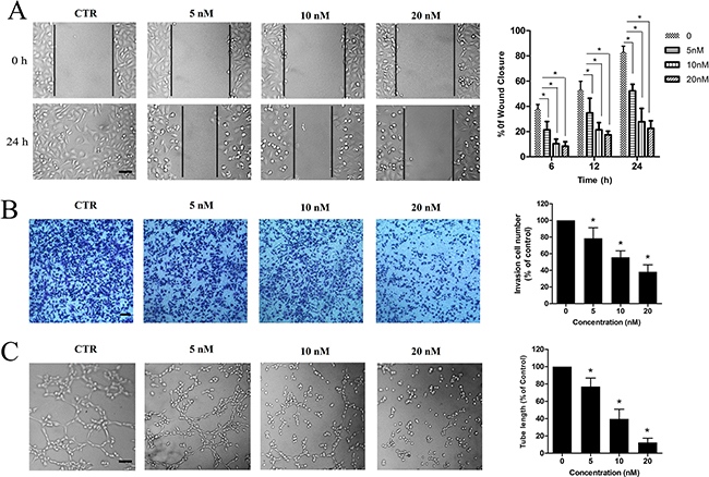 ZLM-7 suppressed VEGF-induced migration, invasion and tube formation of HUVECs.