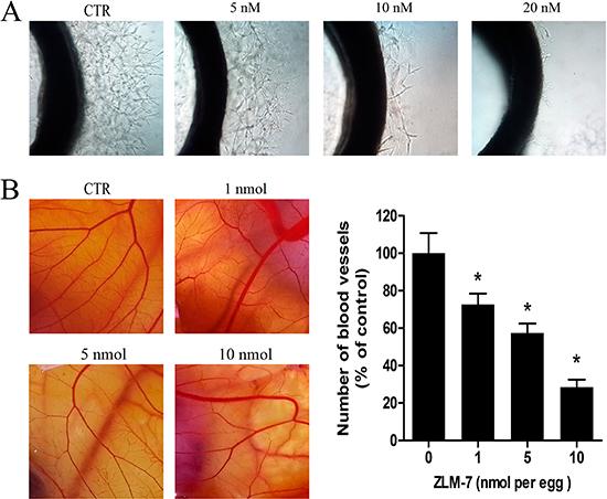 ZLM-7 inhibited angiogenesis.