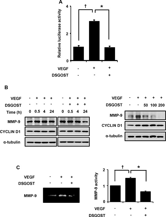 DSGOST inhibits VEGF activation of NF-κB signaling. (A)
