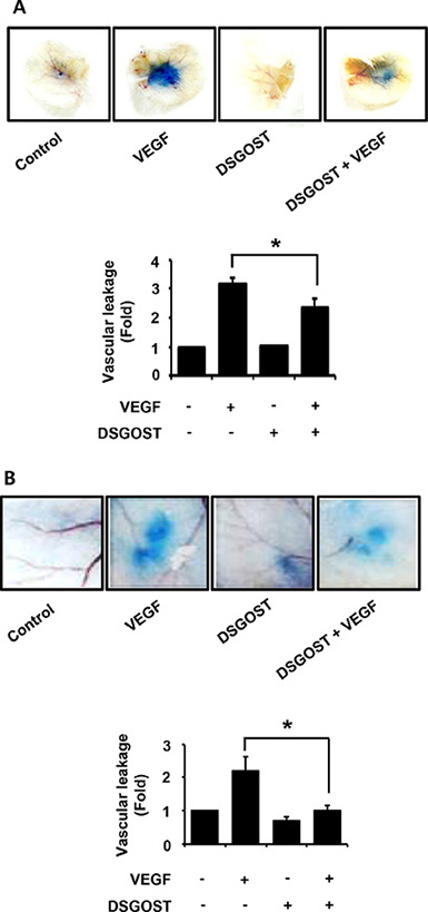 The effect of vascular permeability in vivo by DSGOST treatment.