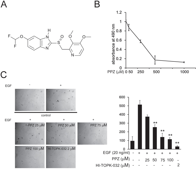 Pantoprazole inhibits EGF-induced anchorage-independent growth of JB6 Cl41 cells.