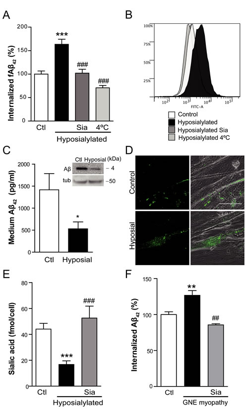 Cell hyposialylation favors Aβ internalization, which is dependent on clathrin and HSPG.