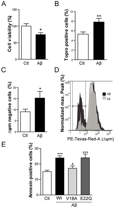 Intracellular Aβ induces cell death and apoptosis in C2C12 myotubes.