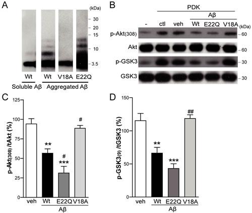 Aβ impairs Akt activation in