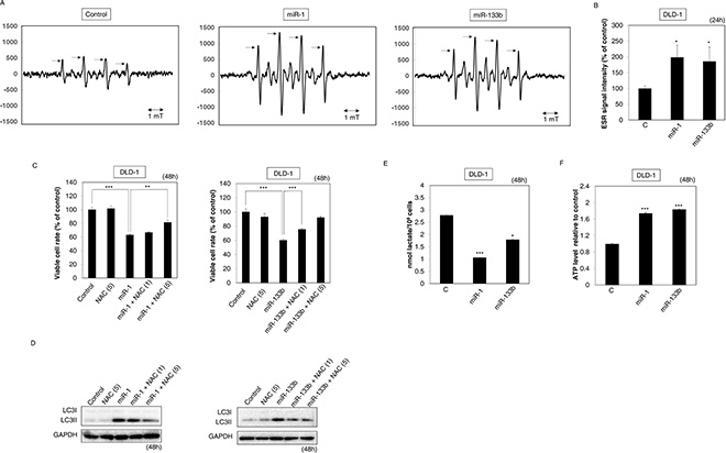Ectopic expression of miR-1 and -133b suppressed the Warburg effect.