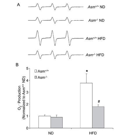 Effects of the normal diet and high fat diet on glomerular O2•− production in Asm+/+ and Asm-/- mice.