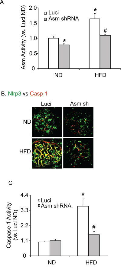 Renal Asm gene silencing efficiency and Nlrp3 inflammasome formation activation in C57BL/6J mice fed with or without high fat diet.