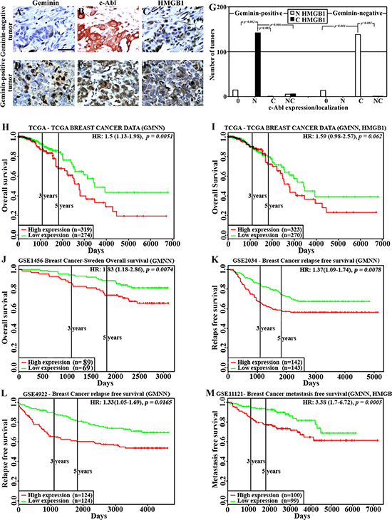 HMGB1 localization and effect on clinical outcome in GemOE tumors.