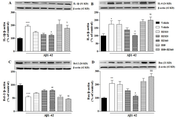 Effects of resveratrol on Aβ 42-induced changes in IL-1β.