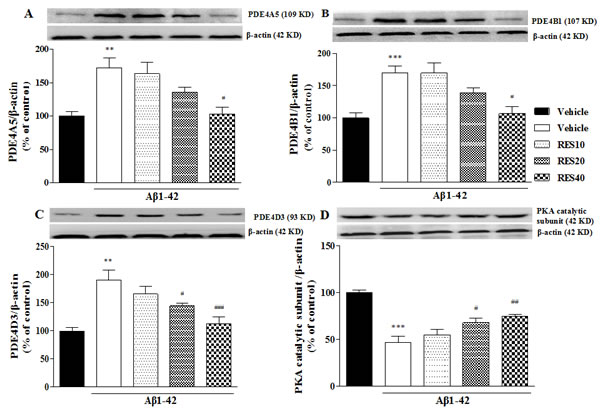 Effects of resveratrol on PDE4A, PDE4B, PDE4D variants and PKA catalytic subunit