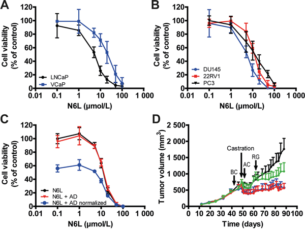 N6L inhibited human prostate tumor cell growth in vitro and in vivo.
