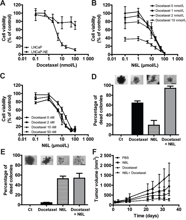 Combination effect of N6L and docetaxel on tumor growth in vitro and in vivo.