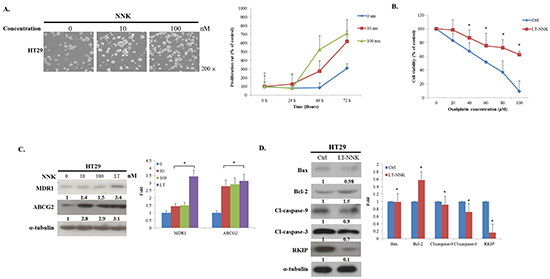 NNK exposure promoted cell proliferation, induced chemoresistance and increased anti-apoptosis.