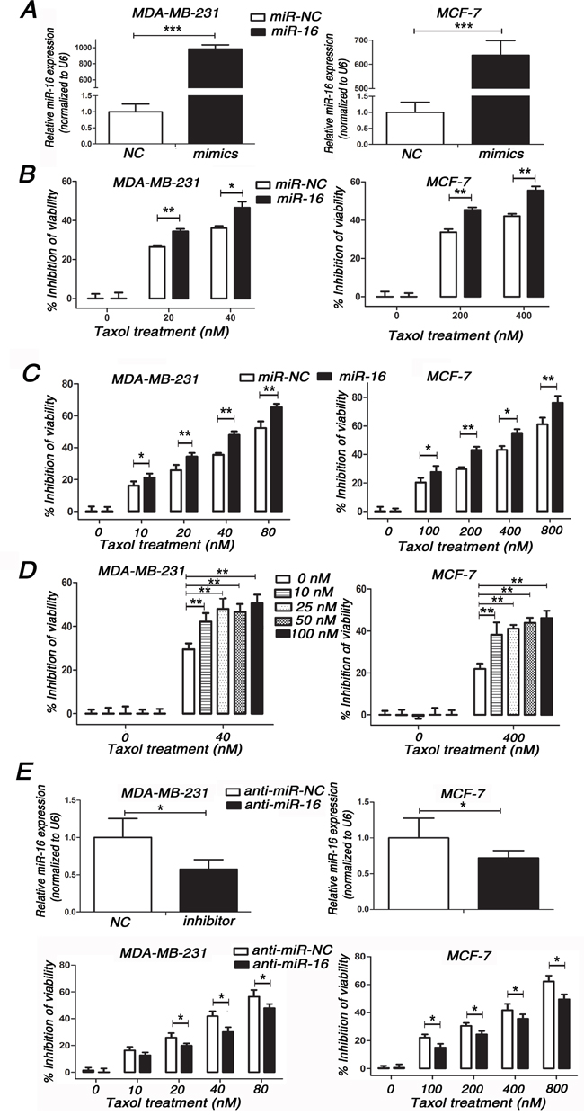 Involvement of miR-16 in Taxol chemosensitivity in breast cancer cells.
