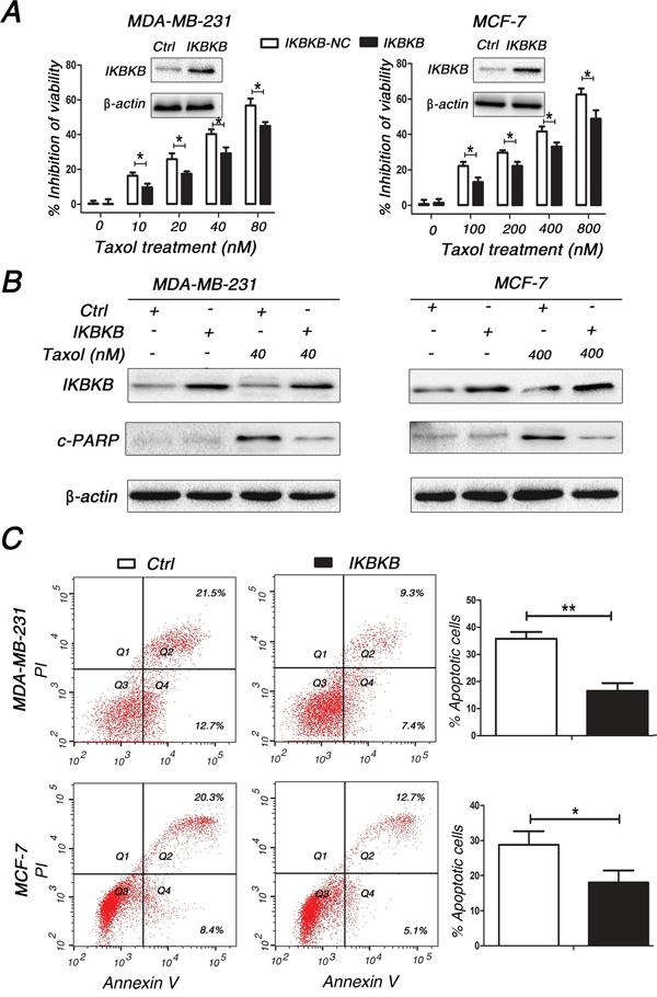 IKBKB plays a critical role in Taxol-induced apoptosis.