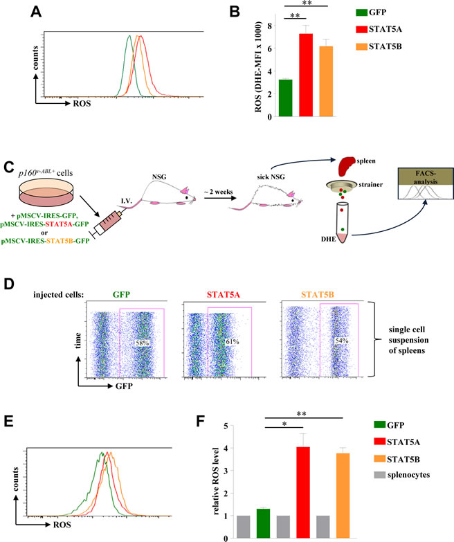 STAT5A and STAT5B expression mediates ROS production in a leukaemia mouse model.