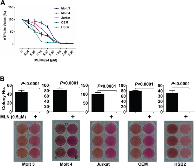 MLN4924 dose-dependently reduces the oncogenic growth of T-ALL cells in-vitro.
