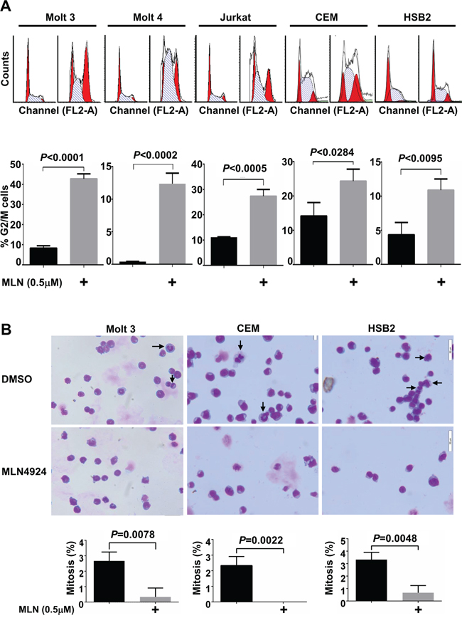 MLN4924 induces cell cycle arrest in the G2 phase in T-ALL cells.