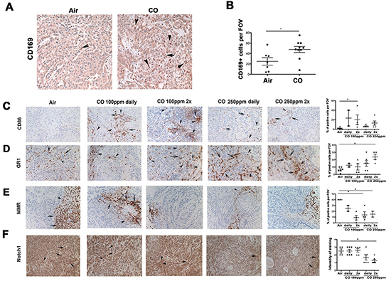 CO enhances infiltration of myeloid cells into tumor microenvironment or their skewing towards M1-like macrophages and additionally increases apoptosis in tumor cells.