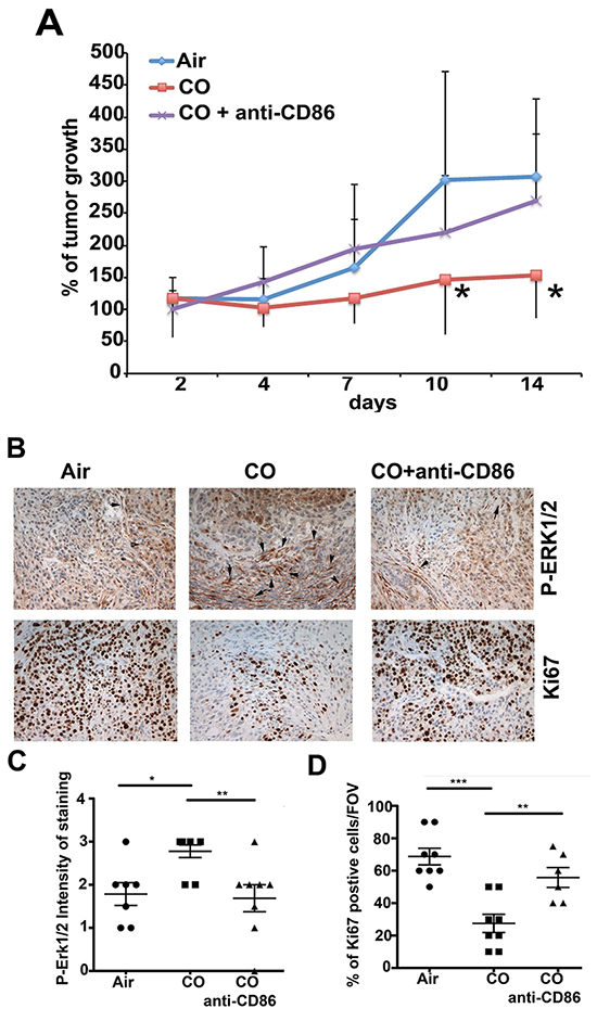 Requirement of CD86high cells in tumor niche for CO effects.
