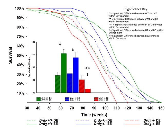 Main - Kaplan-Meier survival curves of mice for genotype and environment.