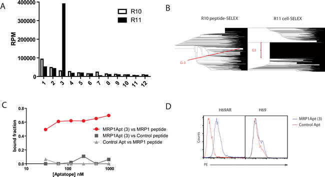 Selection and characterization of MRP1 aptamers.
