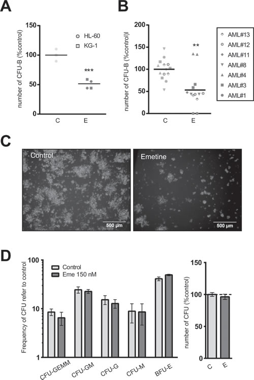 Emetine differentially reduced the clonogenic capacity of AML cells without affecting hematopoietic stem cell function.