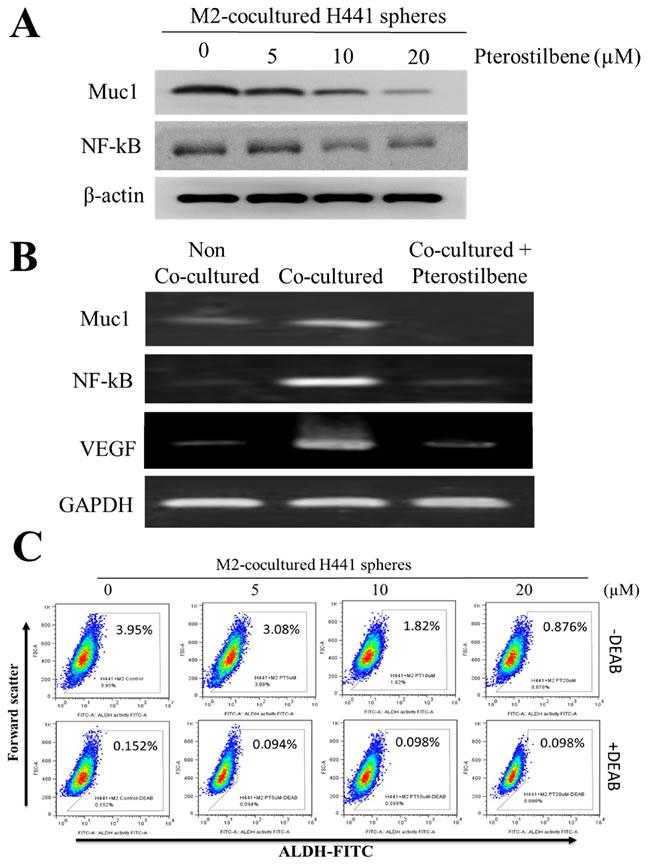 Pterostilbene treatment prevented M2 polarization