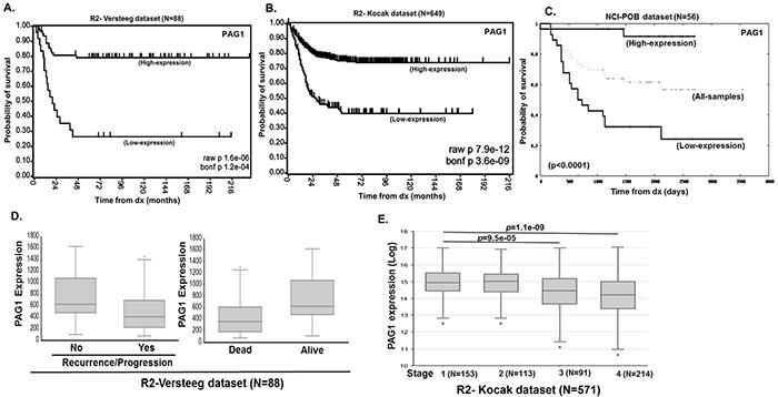 PAG1 is a prognostic factor in neuroblastoma.
