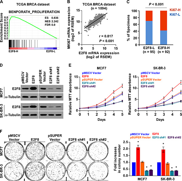 Upregulation of E2F8 promotes proliferation of breast cancer cells.
