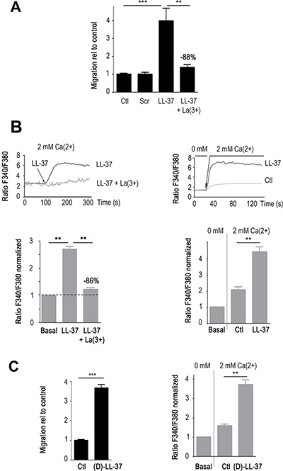 LL-37 induces Ca2+ influx that promotes migration of MDA-MB-435s cells.