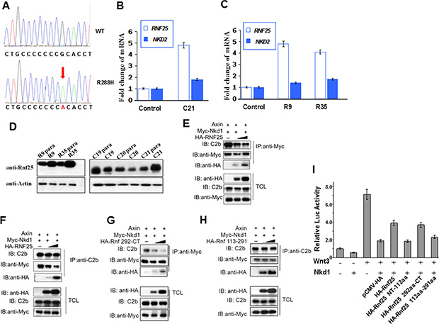 Rnf25 and Nkd1 maintain the balance of Wnt signaling in vivo.