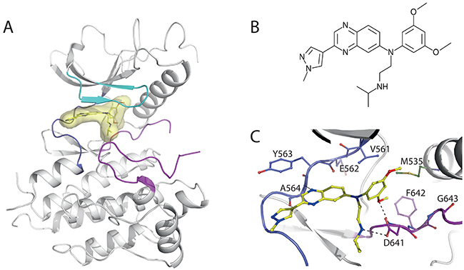 Structural insights into JNJ42756493 binding to FGFR1 KD.