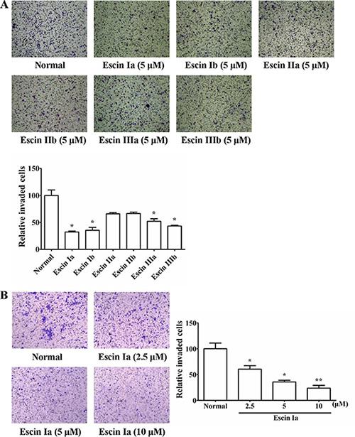 Effect of escin Ia-IIIb on MDA-MB-231 cells invasion.