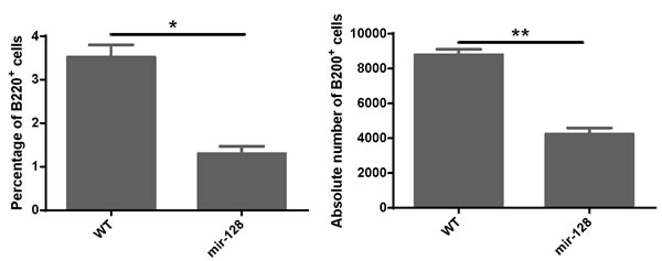 MiR-128-2-overexpressed CLP developed less B cells in the