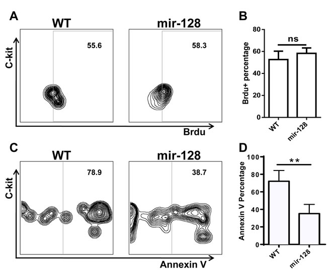 Annexin V staining and BrdU incorporation assay revealed that overexpressing miR-128-2 inhibited the apoptosis of CLP, but did not affect the proliferation of CLP.
