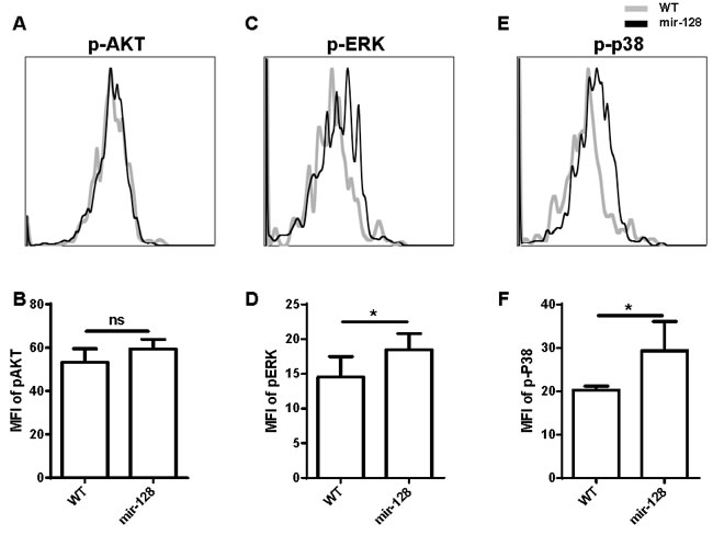 Phosphorylation of ERK and p38 MAPK was enhanced in miR-128-2-overexpressed CLP compared with those in WT CLP.