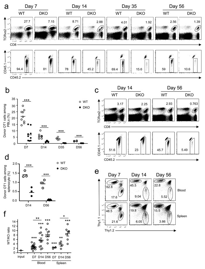 Deficiency of both DGKα and ζ impaired CD8 T cell responses.