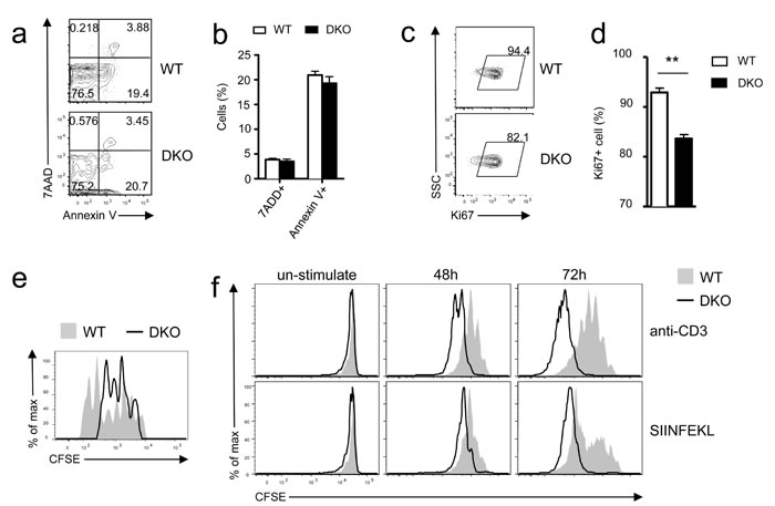 Differential effects of DGKαζ deficiency on OT1 T cell expansion