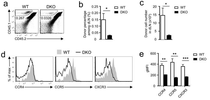 Assessment of DKO CD8 T cell priming