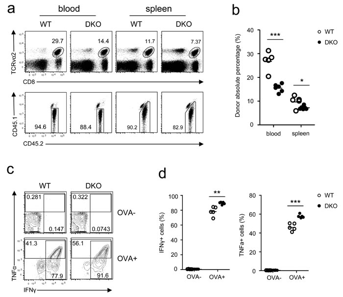 Effects of DGKα and ζ double deficiency on memory CD8 T cell responses.