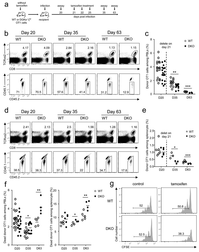Critical role of DGKα and ζ in memory CD8 T cell homeostasis.