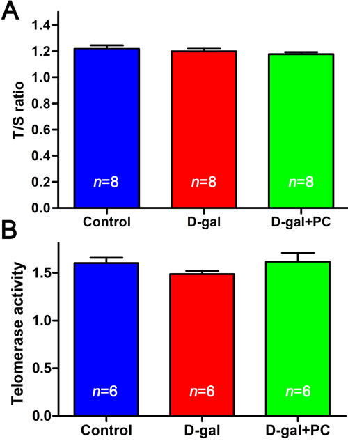 D-gal and PC did not affect telomere length or telomerase activity in mouse ovaries.