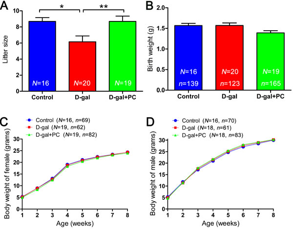 PC treatment led to increase in the litter size of D-gal-induced aging mice but did not influence offspring birth weight or growth rate.